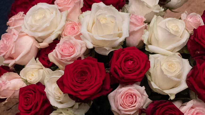 Die freimaurerischen Rosen in Rot, Rosa und Weiß in prächtigen Blüten als Schmuck und Symbol der Festarbeit.